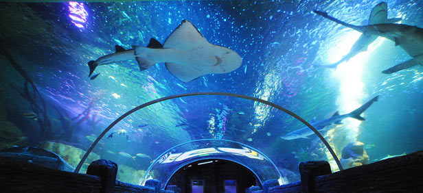 Blackpool Sea Life Centre Blackpool Sea Life Centre in England ...